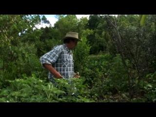 Создание лесосада с Джефом Лотоном (01:22:27)